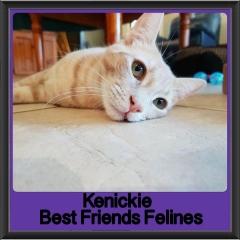 2018 - Kenickie
