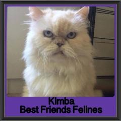 2018 - Kimba