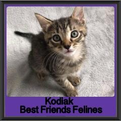 2018 - Kodiak