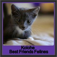 2018 - Kolohe