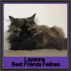 2018 - Layanna
