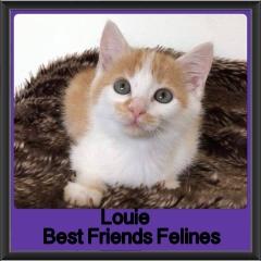 2018 - Louie