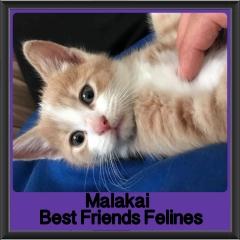 2018 - Malakai