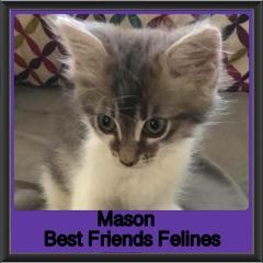 2018 - Mason