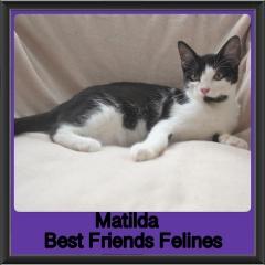 2018 - Matilda