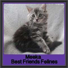 2018 - Meeka