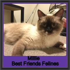 2018 - Millie