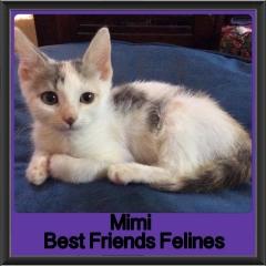 2018 - Mimi