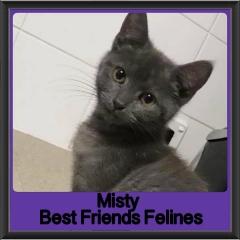 2018 - Misty