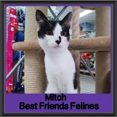 2018 - Mitch