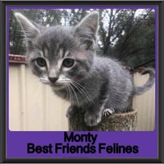 2018 - Monty