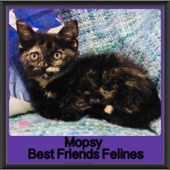 2018 - Mopsy