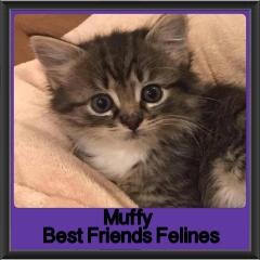 2018 - Muffy