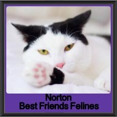 2018 - Norton