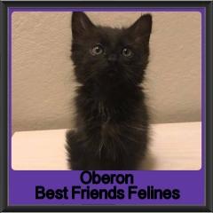 2018 - Oberon