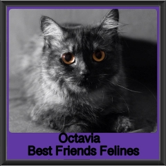 2018 - Octavia