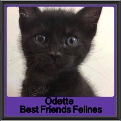 2018 - Odette