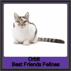 2018 - Orbit