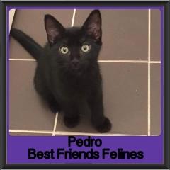 2018 - Pedro