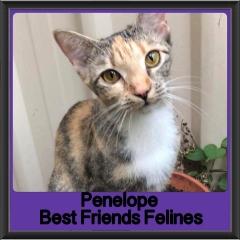 2018 - Penelope