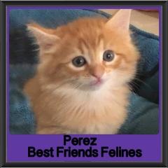 2018 - Perez