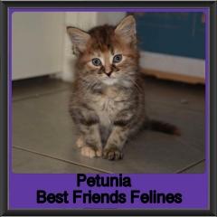 2018 - Petunia