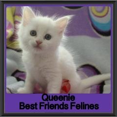 2018 - Queenie