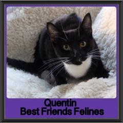 2018 - Quentin