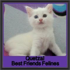 2018 - Quetzal
