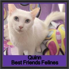2018 - Quinn