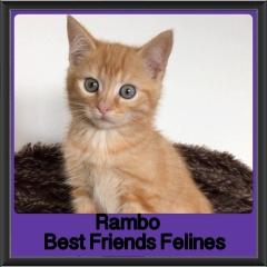 2018 - Rambo
