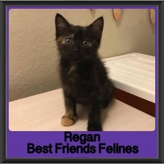 2018 - Regan