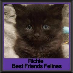 2018 - Richie