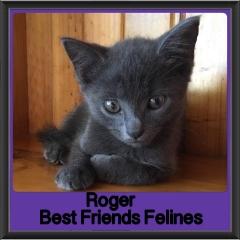 2018 - Roger