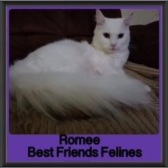 2018 - Romee