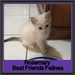 2018 - Rosemary