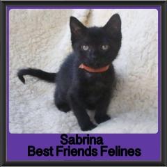 2018 - Sabrina