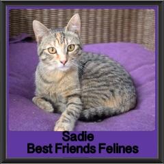 2018 - Sadie