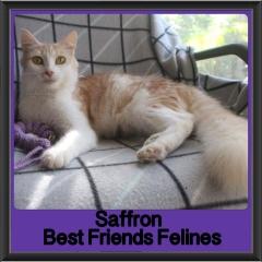 2018 - Saffron