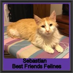 2018 - Sebastian