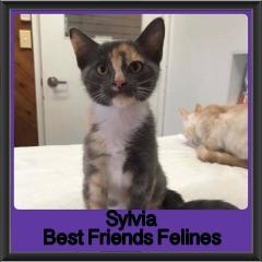 2018 - Sylvia