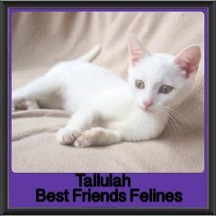 2018 - Tallulah