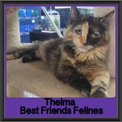 2018 - Thelma