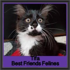 2018 - Tifa