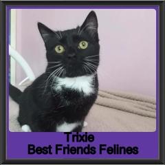 2018 - Trixie