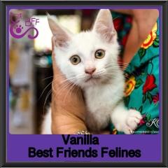 2018 - Vanilla