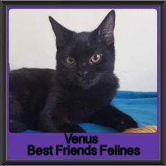 2018 - Venus
