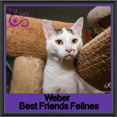 2018 - Weber