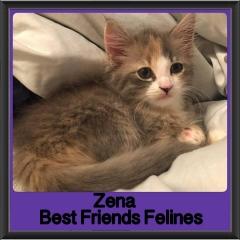 2018 - Zena