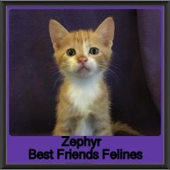 2018 - Zephyr